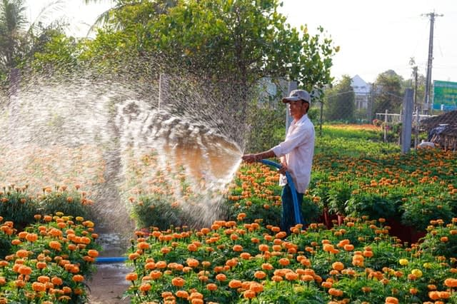 agriculture-beautiful-flowers-farm-2134798